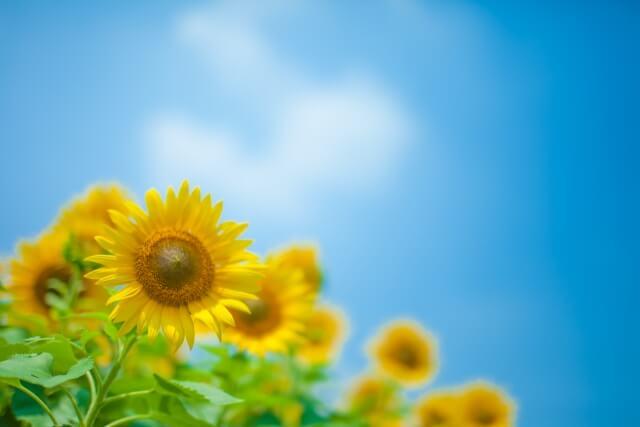 小千谷縮が適した季節は夏