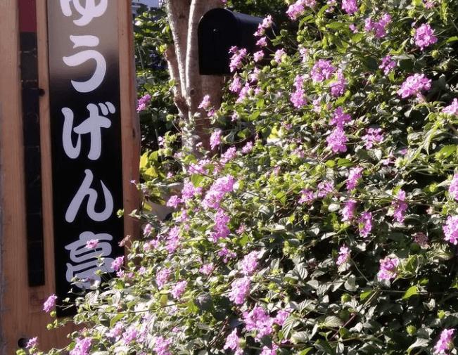 ゆうげん亭 松山店