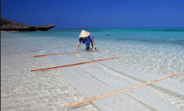 八重山上布の製造工程|伝統の海晒し